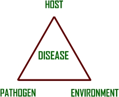 Logo for The Disease Triangle As A Learning Object